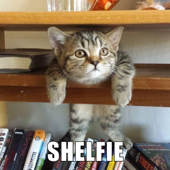 cat meme - Cat - TR SHELEIE APPELLE