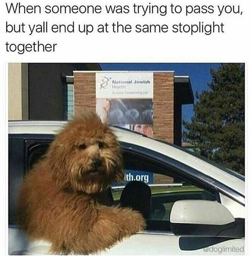 Dog in a car with arm out the window in meme about when you pass someone and they end up at the same stoplight as you.