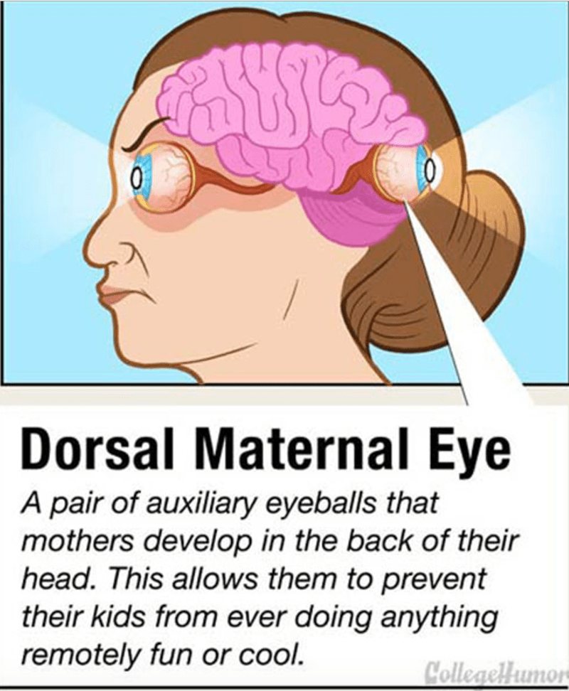 Brain - 0 Dorsal Maternal Eye A pair of auxiliary eyeballs that mothers develop in the back of their head. This allows them to prevent their kids from ever doing anything remotely fun or cool. Colleaellumon