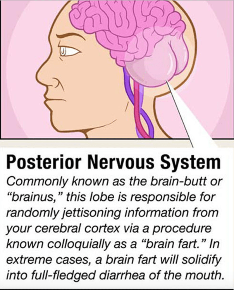 """Hair - Posterior Nervous System Commonly known as the brain-butt or """"brainus,"""" this lobe is responsible for randomly jettisoning information from your cerebral cortex via a procedure known colloquially as a """"brain fart."""" In extreme cases, a brain fart will solidify into full-fledged diarrhea of the mouth."""