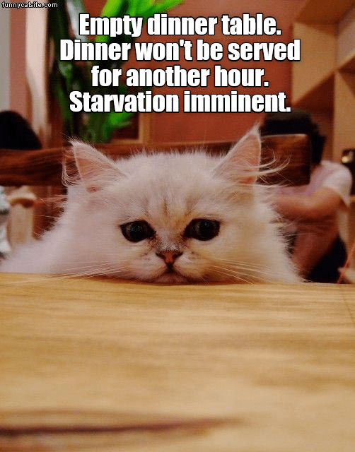 cat meme - Cat - funnycatsite.com Empty dinner table. Dinner won't be served for another hour. Starvation imminent.