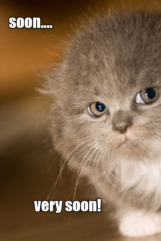 Cat - SOO.... very soon!