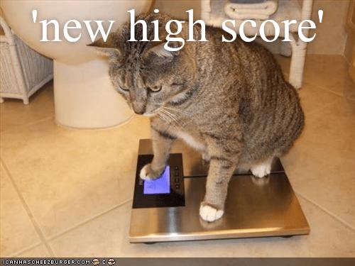 Cat - 'new high score' OCANHASCHEE2EURGER COM
