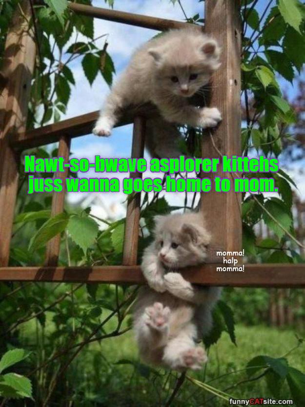 Koala - Nawt-so-bwave aşplorer kittehs juss wanna goes liome to mom momma! halp momma funnyCATsite.com