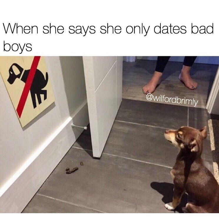 Funny meme about girl liking bad boys, photo of dog not supposed to poop.