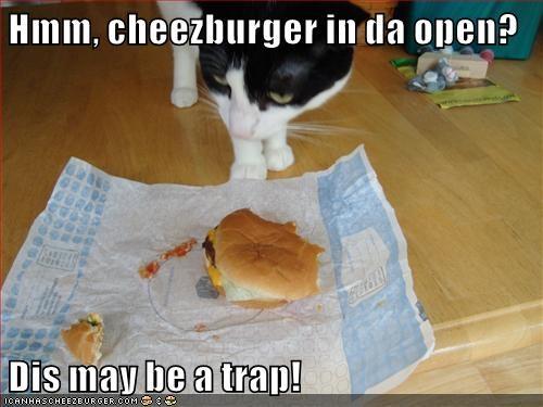 Cheezburger Image 9075194880