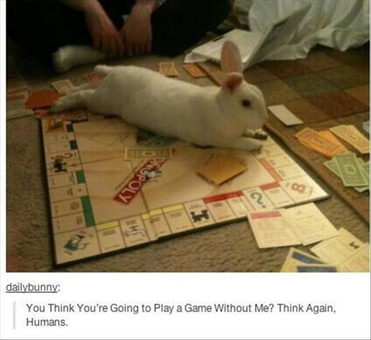 Rat - dailybunny: You Think You're Going to Play a Game Without Me? Think Again Humans