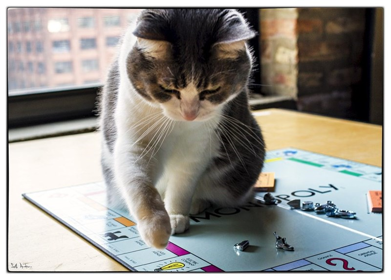Cat - POLY