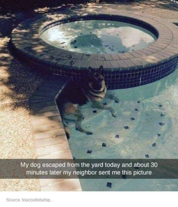 funny tumblr post dog in Swimming pool - My dog escaped from the yard today and about 30 minutes later my neighbor sent me this picture Source: toocooltobehip...