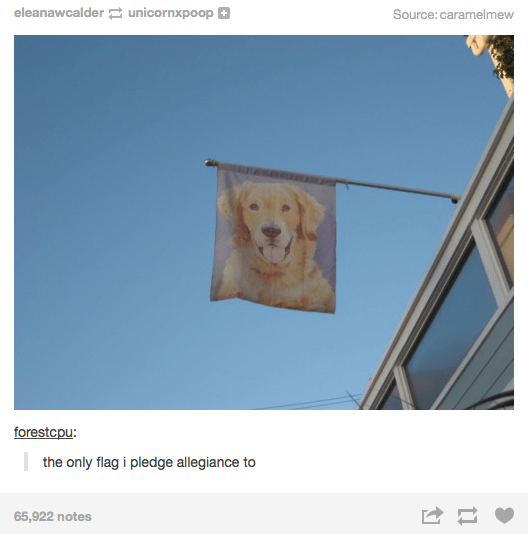 picture of dog on flag funny tumblr post the only flag i pledge allegiance to 65,922 notes