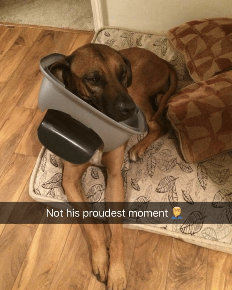 dog with kitty litter box stuck over his head