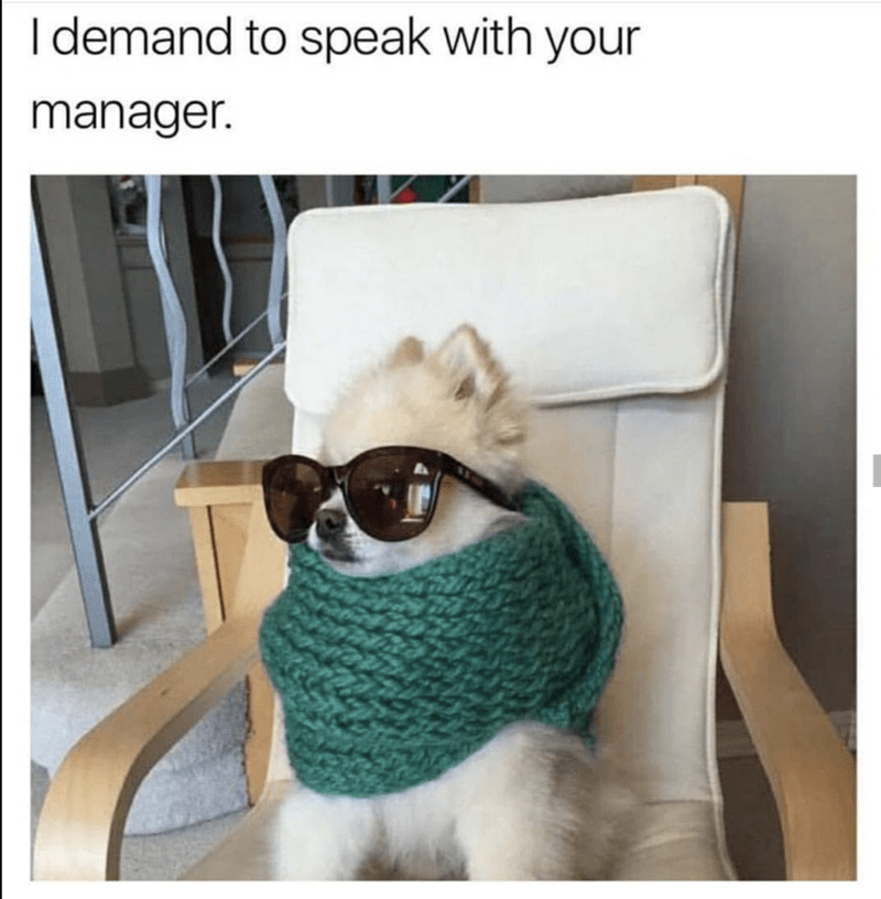 Funny pic of a dog that is totally the type to demand to speak to the manager.