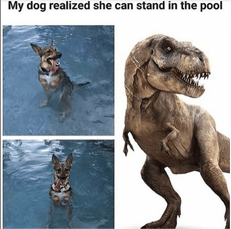 Funny pic of a dog that realized he can stand in the pool, looks like a T-rex because of refraction