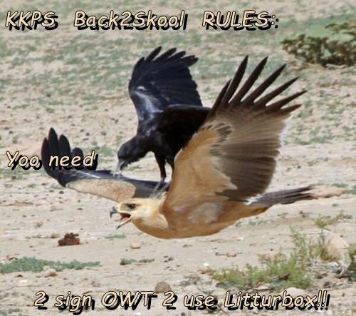 Cheezburger Image 9075788288