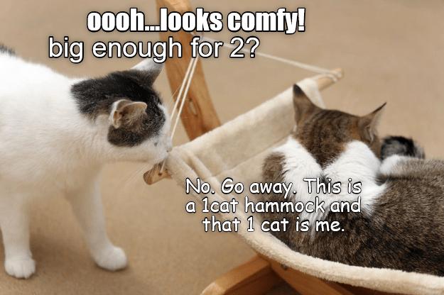 hammock cat meme - 9075863296