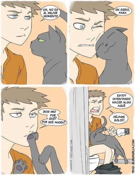 gatos sabe elegir el mejor momento para que lo acaricien