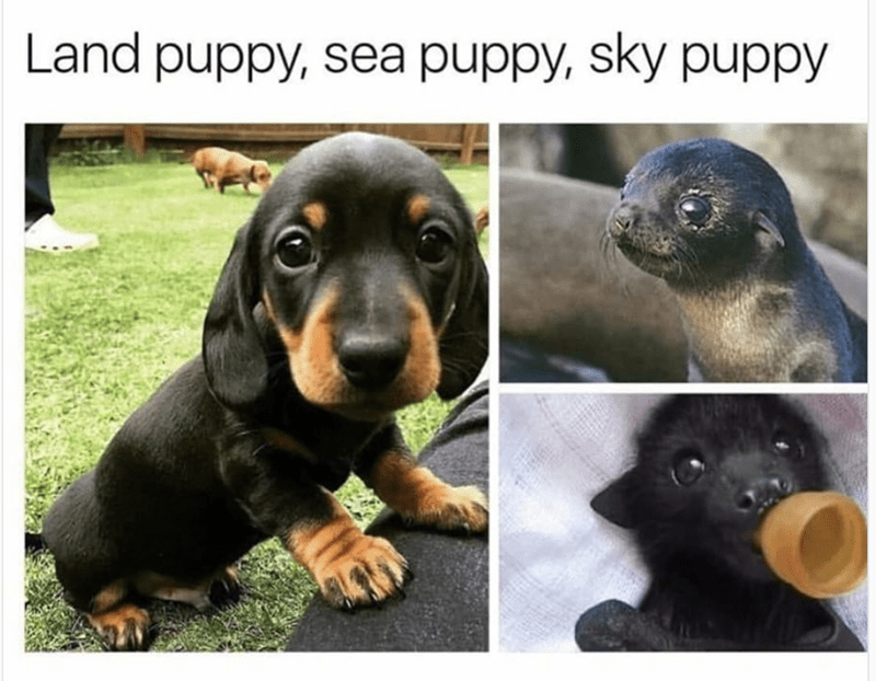 Weekend meme about different type puppies with pics of dog, seal and bat