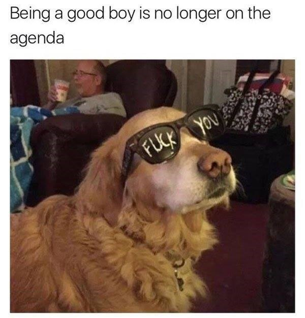"Weekend meme about a dog going bad with pic of dog wearing ""fuck you"" shades"