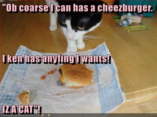 Cheezburger Image 9076065280