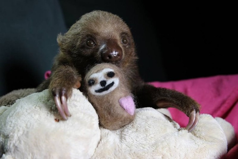 baby sloth with teddy bear
