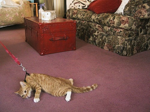 leash - Cat - Db