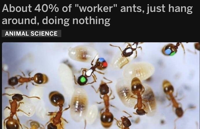 Funny meme about how worker ants don't do anything, same as humans,