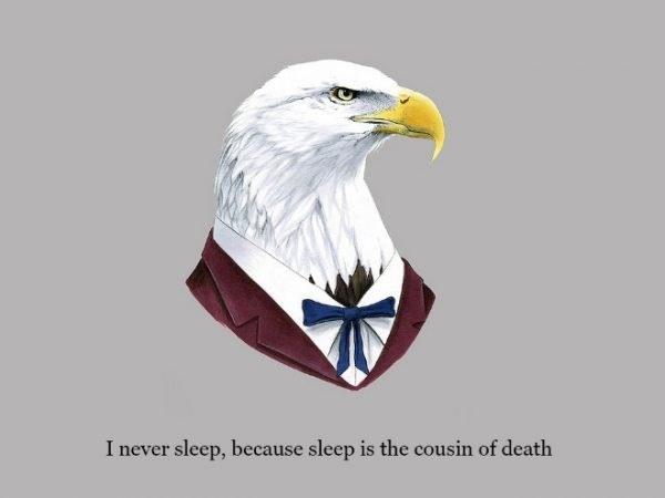 Bald eagle - I never sleep, because sleep is the cousin of death