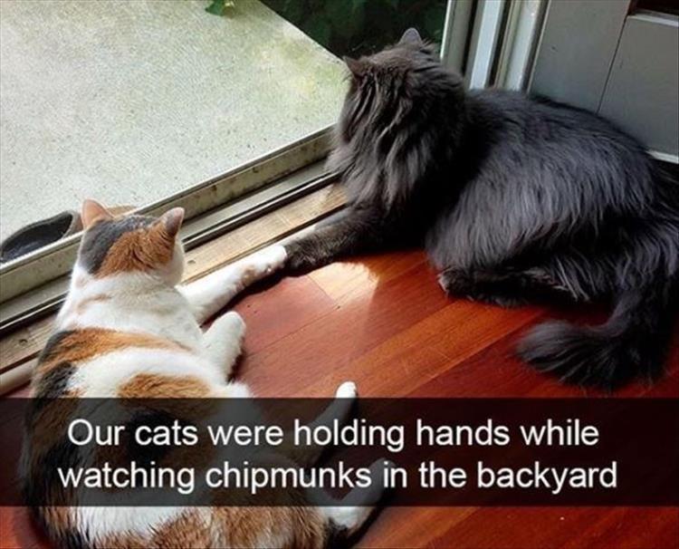 Memes Cats - 9076591616