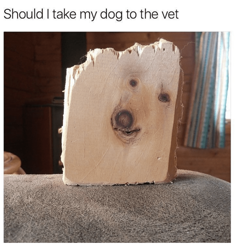dank meme about unspecified pet diseases with picture of wooden plank that appears to have a dogs face on it