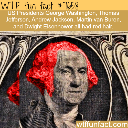 Head - WTF fun fact #T058 US Presidents George Washington, Thomas Jefferson, Andrew Jackson, Martin van Buren, and Dwight Eisenhower all had red hair. wtfunfact.com