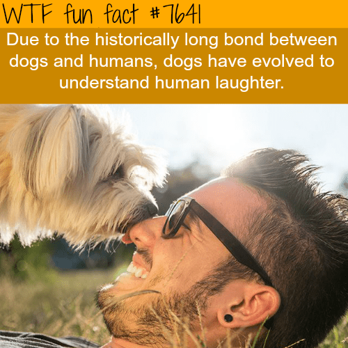 Human - WTF fun fact #T64|| Due to the historically long bond between dogs and humans, dogs have evolved to understand human laughter.