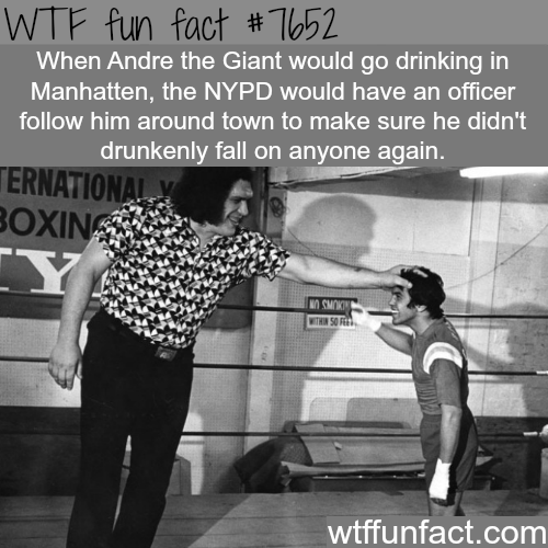 Photo caption - WTF fun fact #T652 When Andre the Giant would go drinking in Manhatten, the NYPD would have an officer follow him around town to make sure he didn't drunkenly fall on anyone again. ERNATIONAL Y BOXIN Y OCMOKI WITHIN SO FE wtffunfact.com