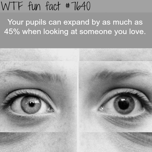 Eyebrow - WTF fun fact #T640 Your pupils can expand by as much as 45% when looking at someone you love.
