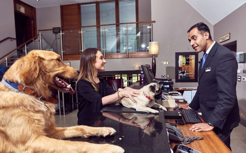Uk Hotel Chain Offers A Five Star Happy Tail Packages For Dog