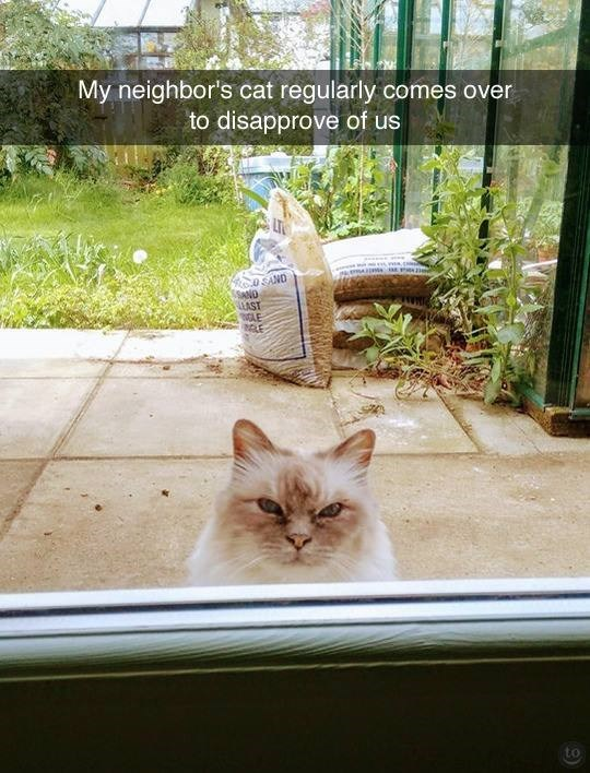 cat meme - Cat - My neighbor's cat regularly comes over to disapprove of us SAND UAST WLE to