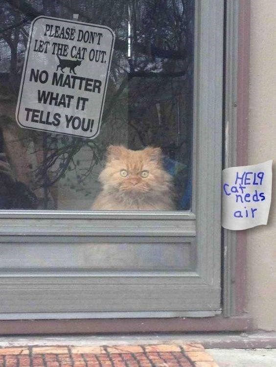 cat meme - Cat - PLEASE DON'T LET THE CAT OUT NO MATTER WHAT IT TELLS YOU! 673H Caf neds air