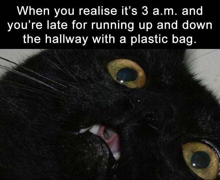 cat meme - Cat - When you realise it's 3 a.m. and you're late for running up and down the hallway with a plastic bag.