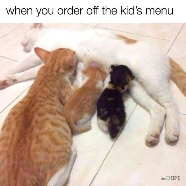 cat meme - Cat - when you order off the kid's theCHIVE