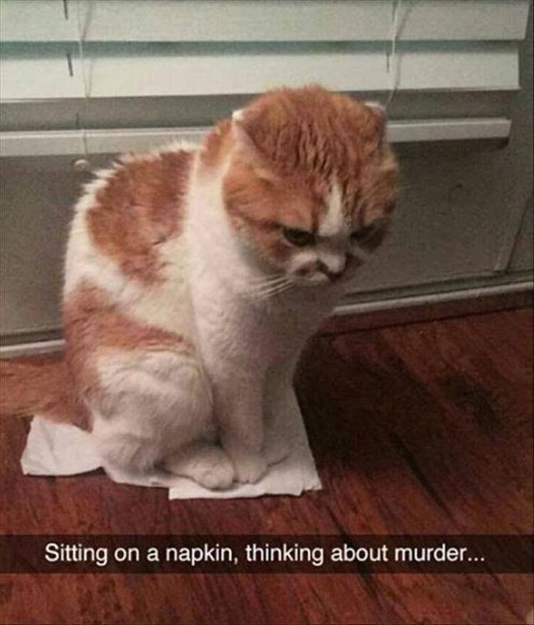 cat meme - Cat - Sitting on a napkin, thinking about murder...