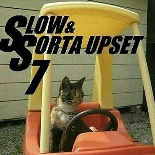 cat meme - Cat - CLOW& ORTA UPSET