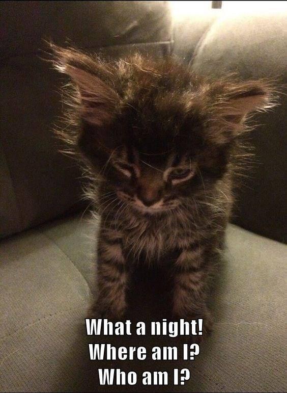 cat meme - Cat - What a night! Where am I? Who am I?