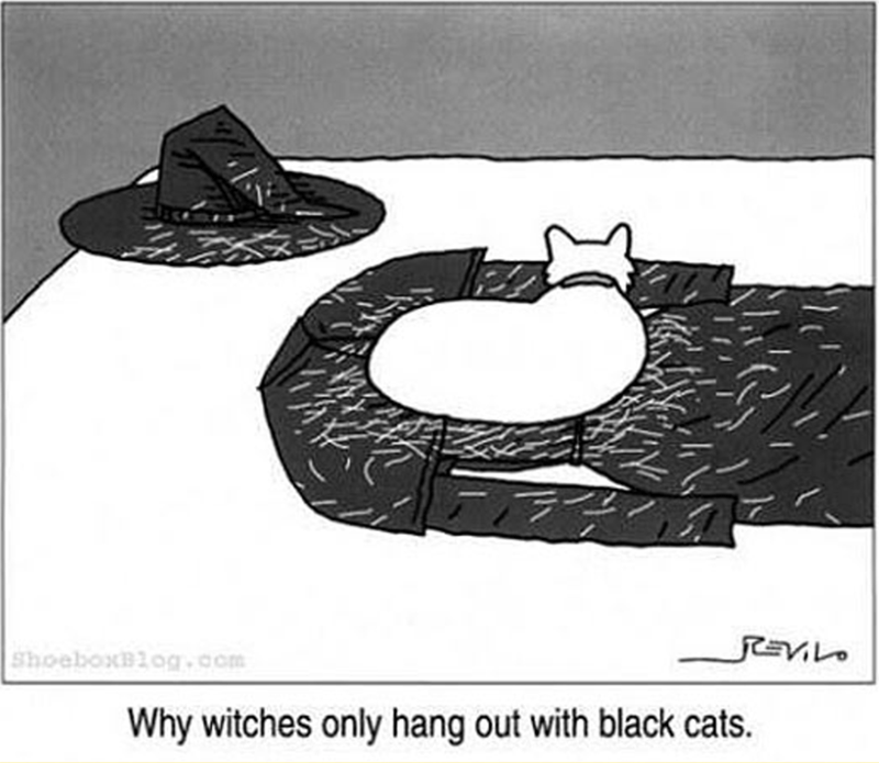 cat meme - Cartoon - Shoeboxlog.com Why witches only hang out with black cats.