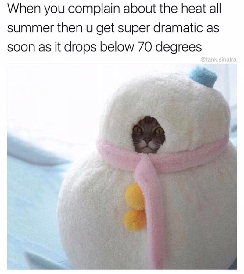 cat meme - Product - When you complain about the heat all summer then u get super dramatic as soon as it drops below 70 degrees @tank.sinatra