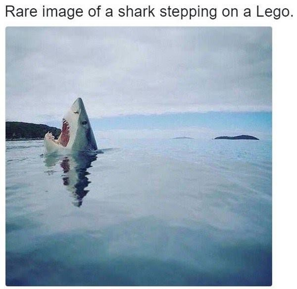 animal memes - funny meme of a shark stepping on a lego