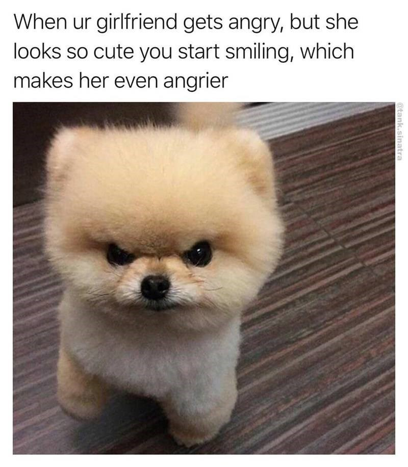 cute angry dog meme of how it feels when GF gets angrier and cuter all of a sudden