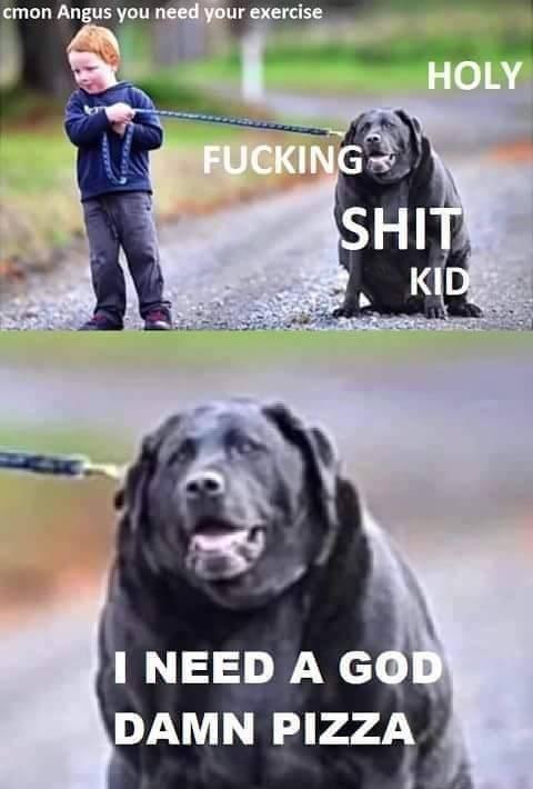 fat dog meme