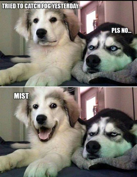bad pun dogs meme