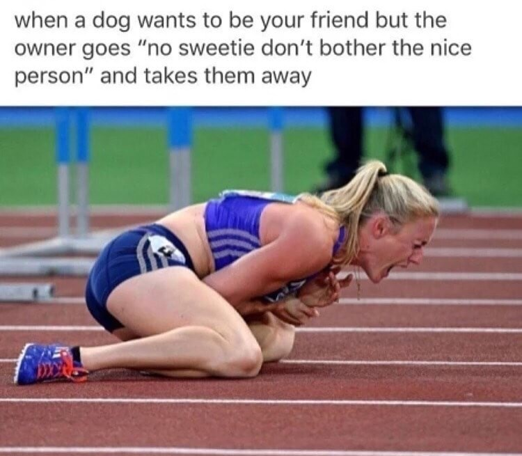 painful meme of when dog wants to be your friend but nope