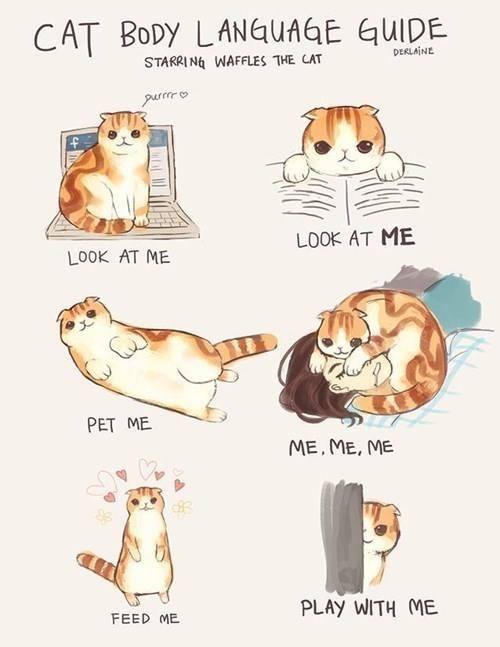 Pembroke welsh corgi - CAT BODY LANGUAGE GUIDE STARRIN WAFFLES THE CAT DERLAINE LOOK AT ME LOOK AT ME PET ME ME,ME, ME PLAY WITH ME FEED ME