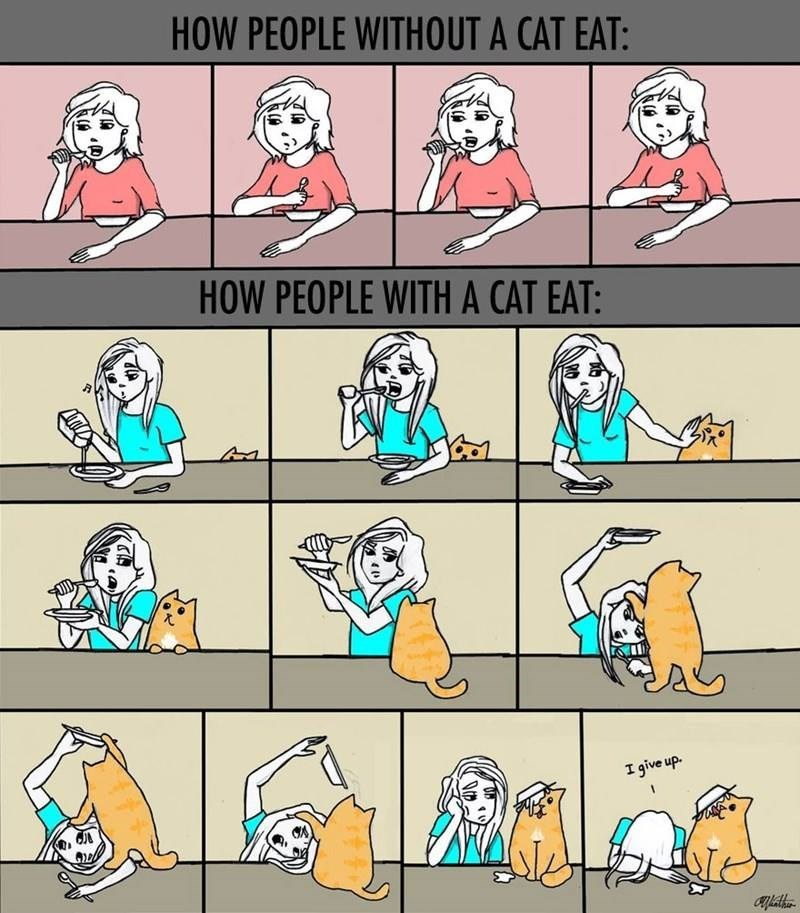 Cartoon - HOW PEOPLE WITHOUT A CAT EAT: HOW PEOPLE WITH A CAT EAT: I give up.